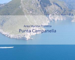 Area Marina Protetta Punta Campanella - Sito internet